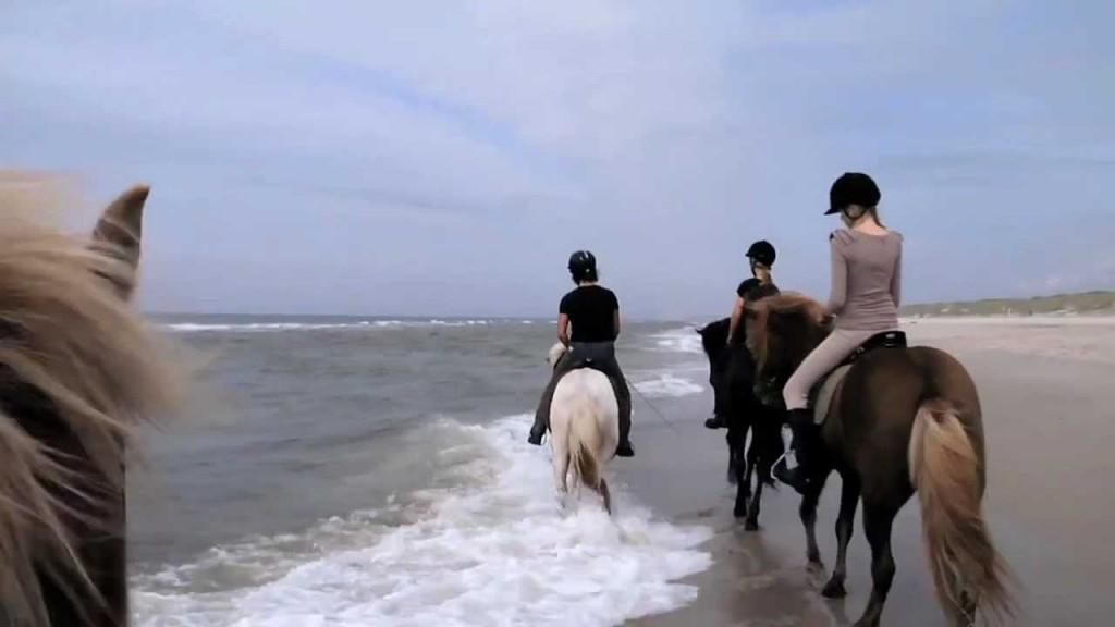 Iceland Horseriding