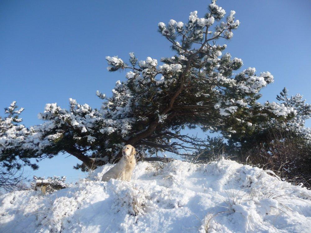 Winterstimmungen